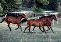 Ocala Florida real estate Horse Farms